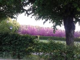 Såg fina blomster på kyrkogården i Noras Borg.