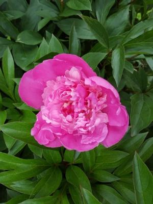 Det finns många fina blomster i svärisarnas trädgård.