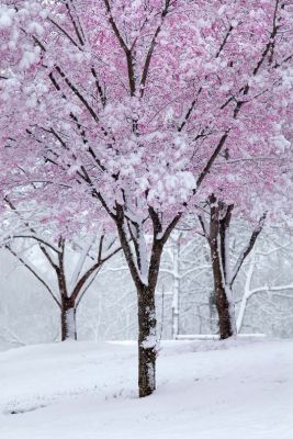 2016-12-14 - Winter 8